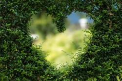 عکس زمینه نمای نزدیک از درخت قلبی