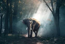 عکس زمینه فیل در جنگل