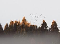عکس زمینه پرنده دسته ای