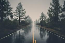 عکس زمینه جاده بین درختان کاج