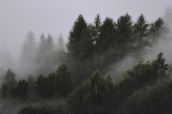 عکس زمینه جنگل مه آلود