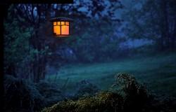 عکس زمینه فانوس روشن در جنگل تاریک