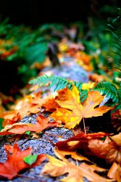 عکس زمینه برگ های خشک پاییزی
