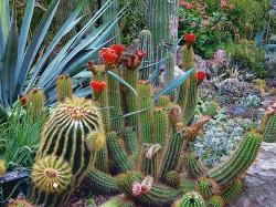 عکس زمینه باغ کاکتوس