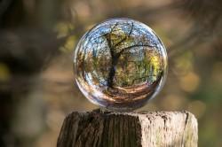عکس زمینه درخت در حباب
