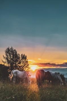 عکس زمینه اسب در غروب