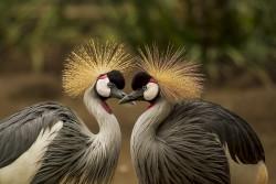 عکس زمینه پرندگان خاکستری و سیاه