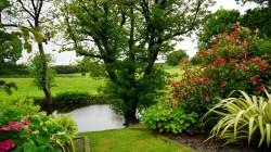 عکس زمینه برگ سبز در کنار رودخانه