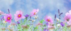 عکس زمینه گل های صورتی و بنفش در دشت