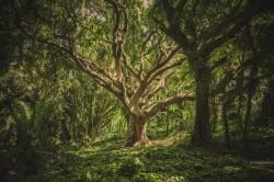 عکس زمینه درخت پر شاخه سبز در جنگل