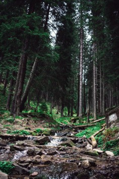 عکس زمینه جنگل در یونان