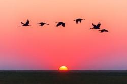 عکس زمینه پرواز پرندگان روی آب هنگام غروب طلایی