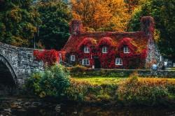 عکس زمینه خانه پوشش داده شده با بوته گل قرمز
