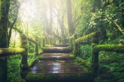 عکس زمینه پل چوبی در جنگل بارونی