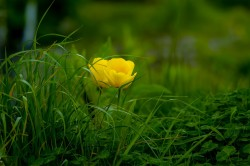 عکس زمینه گیاهان گلدار سبز و زرد