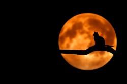 عکس زمینه گربه در ماه کامل