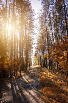 عکس زمینه مسیر در جنگل با نور آفتاب