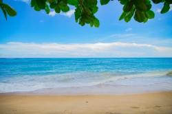 عکس زمینه ساحل دریا و برگ
