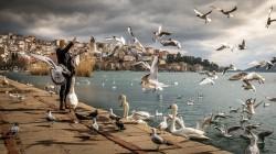 عکس زمینه زن ایستاده نزدیک اقیانوس با قو و پرندگان