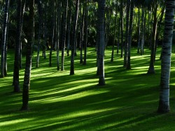 عکس زمینه چمن بین درختان در جنگل