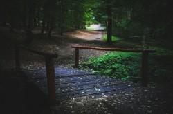 عکس زمینه پل در جنگل