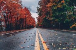 عکس زمینه جاده خیس بین درختان پاییزی