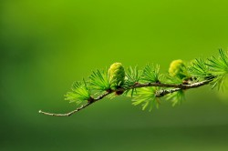 عکس زمینه شاخه و برگ سبز