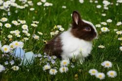 عکس زمینه خرگوش در چمن سرسبز