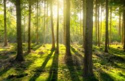عکس زمینه جنگل و تابش نور