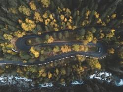 عکس زمینه جاده احاطه شده توسط درختان
