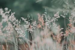 عکس زمینه گیاهان سفید و صورتی