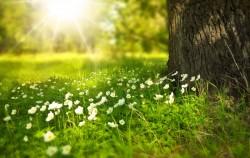 عکس زمینه گل سفید زیر درخت در روز