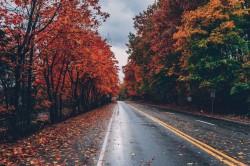 عکس زمینه جاده پاییزی عاشقانه