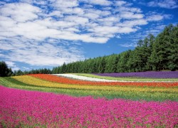 عکس زمینه دشت گل قرمز زرد و نارنجی