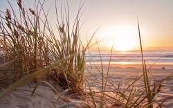 عکس زمینه شن و ماسه مشرف به آب ساحل