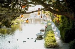 عکس زمینه لامپ آویز در درخت کنار رودخانه