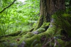 عکس زمینه درخت سبز در جنگل سبز