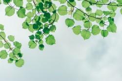 عکس زمینه برگ های سبز زیر آسمان
