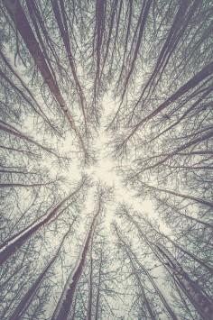 عکس زمینه پایین زاویه از درختان