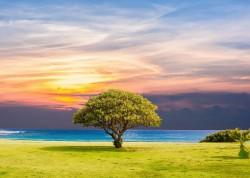 عکس زمینه درخت قهوه ای و سبز در چمن