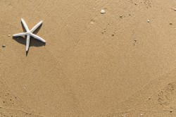 عکس زمینه ستاره دریایی در شن و ماسه