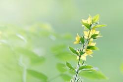 عکس زمینه گلبرگ های زرد و سبز