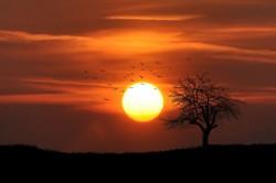 عکس زمینه پرواز پرندگان در غروب