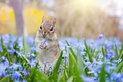 عکس زمینه سنجاب در باغ گل بنفش