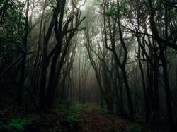عکس زمینه جنگل تاریک با مه