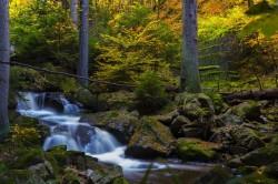 عکس زمینه آبشار کنار درختان