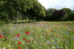 عکس زمینه چشم انداز از باغ گل