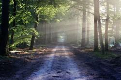 عکس زمینه نور خورشید بین درختان کنار جاده