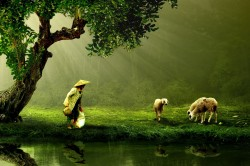 عکس زمینه زن و گوسفند در کنار آب