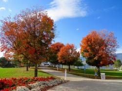 عکس زمینه درختان پاییزی در شهر